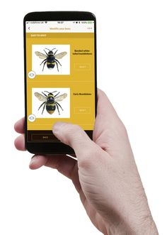 Download the free #GreatBritishBeeCount app to discover more bees, and join our national survey. Includes bee identification guide & survey, handy planting tips, and more!