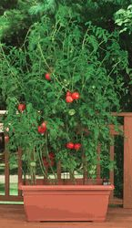 vegetable container gardening in 5 easy steps