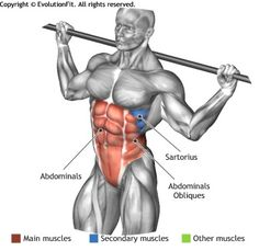 ABDOMINALS -  BARBELL SIDE BEND