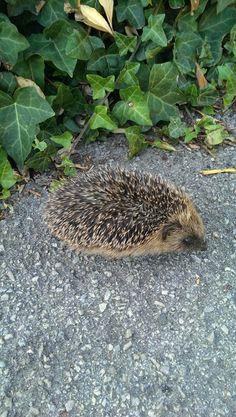 We saw a hedgehog around 6ish :s