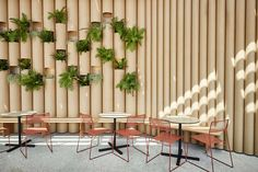 Wulugul Pop-Up by Foolscap Studio at Barangaroo in Sydney. Made from recycled cardboard tubes and sustainable local plywood.