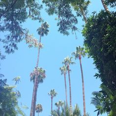 California Dreaming   #bedtimestories #westhollywood #memorymonday #hollywoodlife #fromwhereistand #nofilterrequired