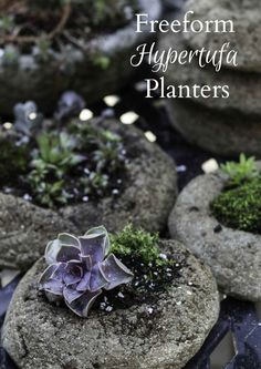 Learn to make a freeform hypertufa planter with this easy tutorial. These rustic looking containers are perfect for succulents and shallow rooted plants. - Lawn and Garden Today Concrete Planters, Garden Planters, Succulents Garden, Rock Planters, Cement Pots, Wall Planters, Concrete Garden, Balcony Garden, Planter Boxes