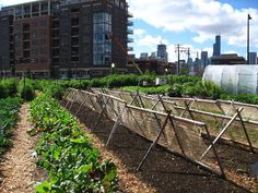 Four Ways the Local Food Movement Is Transforming Race Relations in America