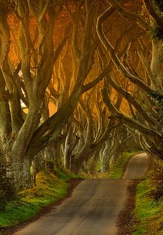 The Dark Hedges, Ireland - the most beautiful road in the world