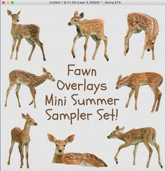 One high-resolution instant download of this Fawn Overlays template (a template with 8 total Fawns to use!) in a .png file format for personal or professional photographic and business use only.Created in Adobe Photoshop.Fawn photos by: Carrie Ann Grippo-Pike with © Captured By Carrie Photography