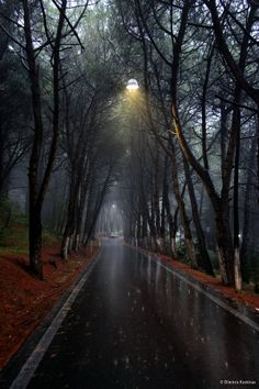 SEASONAL – AUTUMN – a scenic pathway surrounded by the brilliant colors of fall on a rainy day in rhodes, greece, photo via adventure. Beautiful Places, Beautiful Pictures, Dame Nature, I Love Rain, Rain Days, Rain Photography, Rainy Night, Rainy Mood, Singing In The Rain