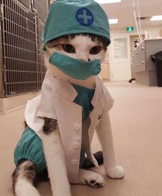 Dr. Meows.