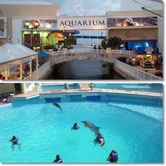 Cancun Interactive Aquarium