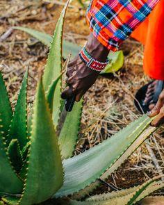 Aloe Vera Gel beruhigt und schützt die Haut und pflegt sie weich und geschmeidig. Im Sommer beruhigt das Gel deinen Sonnenbrand, in kälteren Monaten pflegt es strapazierte Winterhaut. Aloe Vera Gel, Juice, Summer, Juices, Juicing