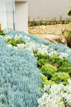 Secrets of a thriving rooftop garden. Photography by Sam McAdam-Cooper.