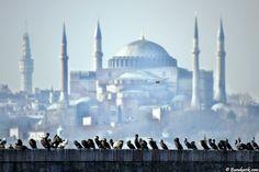 Birds enjoy Hagia Sophia view!