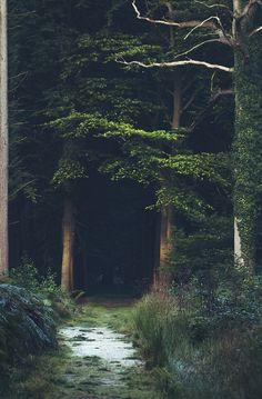 ✯ Dark Path