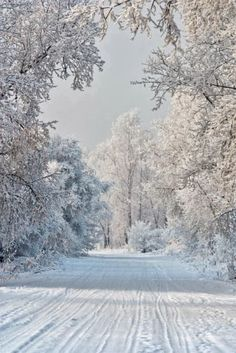After The Snow Fall All is Silent....a Winter Wonderland