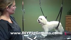 How to Groom A Maltese (Puppy Cut) - Do-It-Yourself Dog Grooming