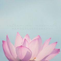 Lotus meets sky Photographic print
