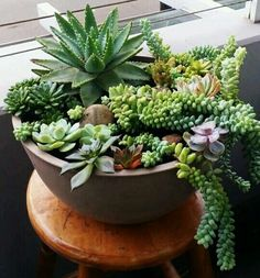 Types of Succulents & How to Grow It for Beginners Types Of Succulents, Succulents In Containers, Cacti And Succulents, Planting Succulents, Cactus Plants, Garden Plants, Succulent Landscaping, Succulent Gardening, Succulent Pots