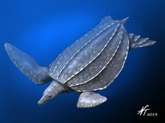 Ocepechelon by NTamura on DeviantArt  A quite extraordinary mesozoic turtle that fed by suction feeding