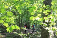 제주도 자연이  아름다운 사려니숲 단풍나무