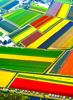 An aerial view of colourful tulip fields in Lisse, The Netherlands. Today Holland produces more than nine billion bulbs every year, with two-thirds of tulips exported across the world. Places To Travel, Places To See, Dutch Tulip, Tulip Fields, Wtf Fun Facts, Random Facts, Aerial Photography, Places Around The World, Aerial View