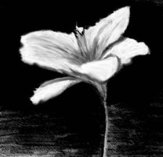 charcoal sketches of flowers -