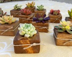 Items similar to 100 Succulent WEDDING Favors, Succulent Bridal Shower favor, Baby shower favor, Special Event Favor, Spring or summer on Etsy Wedding Gifts For Guests, Wedding Favors For Guests, Unique Wedding Favors, Unique Weddings, Wedding Keepsakes, Bridal Shower Rustic, Bridal Shower Favors, Rustic Wedding, Trendy Wedding