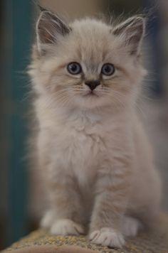 Precious kitten!