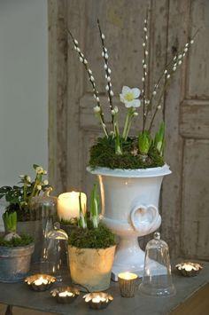 Vintage Blumentöpfe mit Zwiebelpflanzen, Moos und Weidenkätzchen