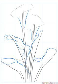 How to draw a calla lily step by step. Drawing tutorials for kids and beginners.