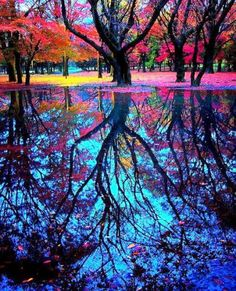 Colourful autumn reflective