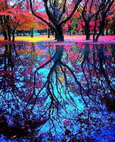 Colourful autumn reflective