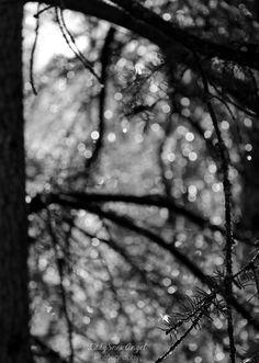 Nature Bokeh by LadySnowAngel #photography #nature #blackandwhite