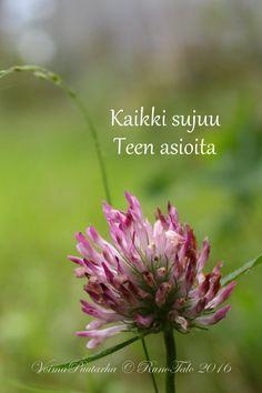K U N A I K A K A T O S I    voimaruno & voimakortit   viikko 46 - 2016             Istuessaan yksin kivellään   pienin Marjamaa...
