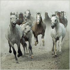 The flock. Photo by Wojtek Kwiatkowski.