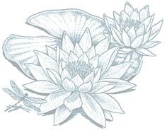 The Hidden Agenda Of Water Lily Tattoo Drawing Lily Pad Drawing, Lilies Drawing, Lotus Drawing, Orchid Drawing, Drawing Step, Lotusblume Tattoo, Tattoo Drawings, Art Drawings, Water Lily Tattoos