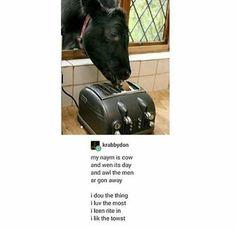 Emily Dickinson, Robert frost, Edgar Allen Poe, move over. Make way for Krabbydon! Funny Animal Memes, Funny Animals, Cute Animals, Funny Cute, The Funny, Hilarious, I Lik The Bred, Animal Poems, Funny Poems