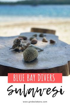 Blue Bay Divers Resort Sahaung Island Tauchen in Sulawesi Jimbaran Bali, Bangka, Beste Hotels, Koh Tao, Southeast Asia, Island, Bays, Gin, Wanderlust