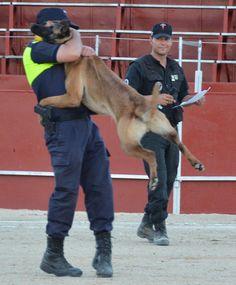 Giancarlo Novias patrocinador oficial de la II exhibicion de perros policia de Yeles (Toledo), una forma ludica de decir ¡¡¡ NO A LAS DROGAS !!!