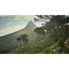 Lions Head, Cape Town. Hire car to get there! http://www.pinterest.com/pin/572731277583116652/