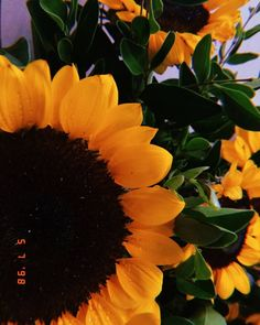 i'm sorry i said that to you bc that was a little weird but uuuhhhhh it's true so yeah Sunflowers And Daisies, Love Flowers, Beautiful Flowers, Aesthetic Iphone Wallpaper, Aesthetic Wallpapers, Tumblr Wallpaper, Wallpaper Backgrounds, Tumblr Photography, Nature Photography
