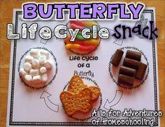 The Best of Teacher Entrepreneurs II: Butterfly Life Cycle! Butterfly Life Cycle Activi...