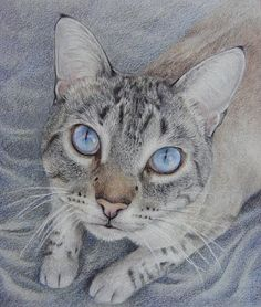 AMAZING!!  Tabby cat coloured pencil drawing.  This is amazing!  Looks like a photo, not a drawing.