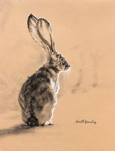 """Intro to Realism"" with Karine Swenson; Online Class OPEN for Registration! Desert Animals, Cute Wild Animals, Love Drawings, Animal Drawings, Desert Drawing, Images Of Desert, Rabbit Drawing, Online Art Classes, Animal Facts"