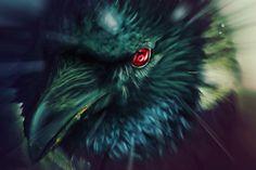 Itachi's crow