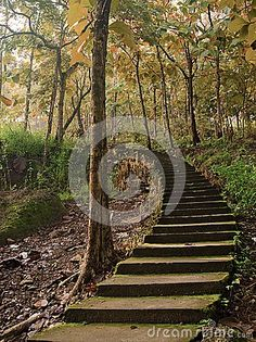 Staircase Leading to the trees in fall season with orange leaves