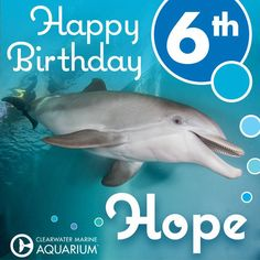 Help us in wishing Hope Dolphin a very happy birthday! Hope has not only given Winter a beautiful friendship, but she has also brought joy and happiness to so many people around the world! Dolphin Tale 2, Dolphin Reef, Bottlenose Dolphin, White Humpback Whale, Ocean Park Hong Kong, Clearwater Marine Aquarium, Dolphin Photos, Happy 6th Birthday, Manatees