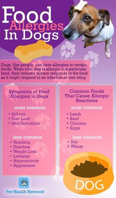 Food allergies in dogs. Take a moment to read this chart and see if your dog may have any allergies. Dog Health Tips, Pet Health, Food Dog, Dog Food Recipes, Healthy Recipes, Pet Care Tips, Dog Care, Puppy Care, Common Food Allergies