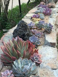 Ideas for Creating Amazing Garden Succulent Landscaping - Estella K. - Ideas for Creating Amazing Garden Succulent Landscaping – # - Succulent Landscaping, Succulent Gardening, Cacti And Succulents, Front Yard Landscaping, Planting Succulents, Backyard Landscaping, Landscaping Ideas, Succulent Rock Garden, Succulent Wall
