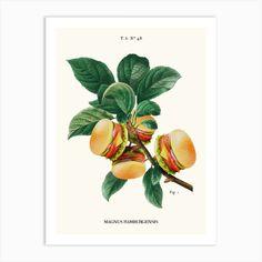 Burger Plant Art Print by Jonas Loose - Fy Art Burger, Fine Art Prints, Canvas Prints, Plant Cuttings, Plant Art, Diy Frame, Plant Holders, Planting Flowers, Gallery Wall