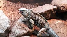 Riverbank Zoo, Animals, Animales, Animaux, Animal, Animais